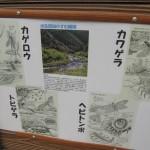 岸辺に棲む虫たち