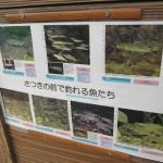 川の魚たち
