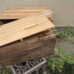 買ってきたばかりのミツバチ