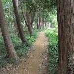 多峯主山のハイキング道